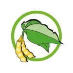 Soybeans and products thereof